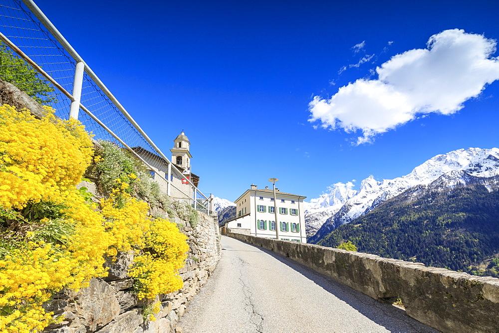 Yellow flowers and snowy peaks on the roadway to Soglio, Maloja, Bregaglia Valley, Engadine, canton of Graubunden, Switzerland, Europe