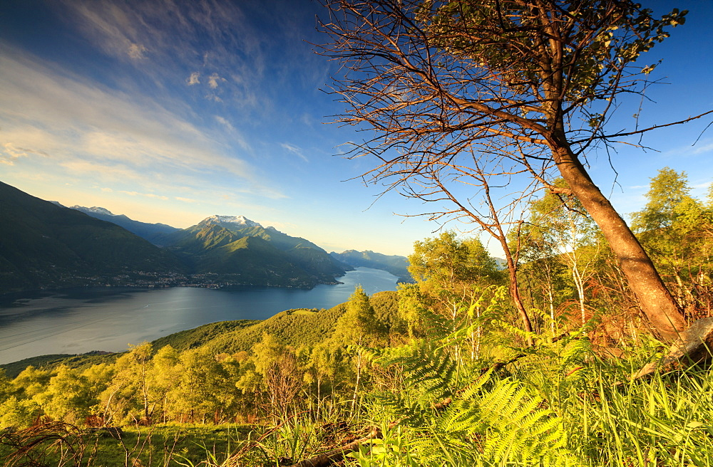 Lake Como surrounded by green meadows framed by the first lights of dawn, Cremia, San Domenico, Lombardy, Italian Lakes, Italy, Europe
