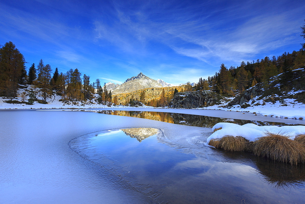 Rocky peaks and larches reflected in the frozen Lake Mufule, Malenco Valley, Province of Sondrio, Valtellina, Lombardy, Italy, Europe