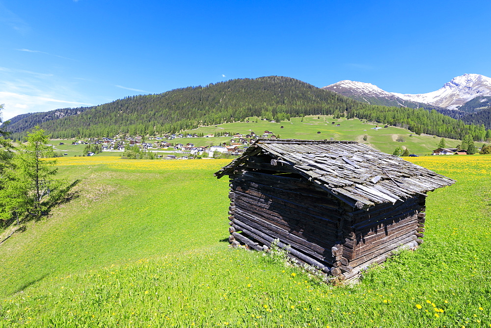 Alpine hut in the green meadows, Davos Wiesen, Canton of Graubunden, Prettigovia Davos Region, Switzerland, Europe