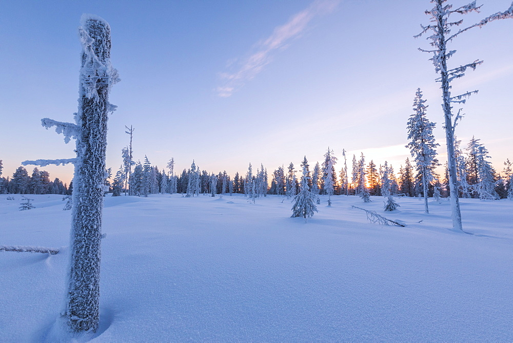 Sunset on trees covered with ice in the boreal forest (Taiga), Kiruna, Norrbotten County, Lapland, Sweden, Scandinavia, Europe - 1179-2475