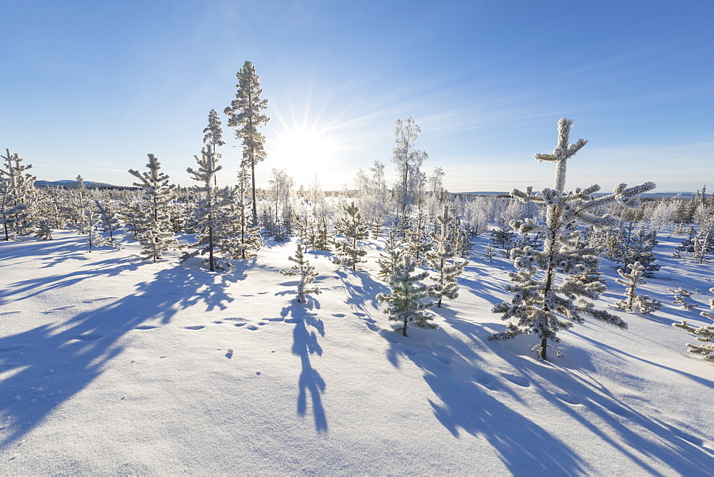 Sunburst on frozen trees covered with snow, Kiruna, Norrbotten County, Lapland, Sweden, Scandinavia, Europe - 1179-2476
