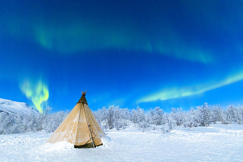 Isolated Sami tent in the snow under Northern Lights (Aurora Borealis), Abisko, Kiruna Municipality, Norrbotten County, Lapland, Sweden, Scandinavia, Europe