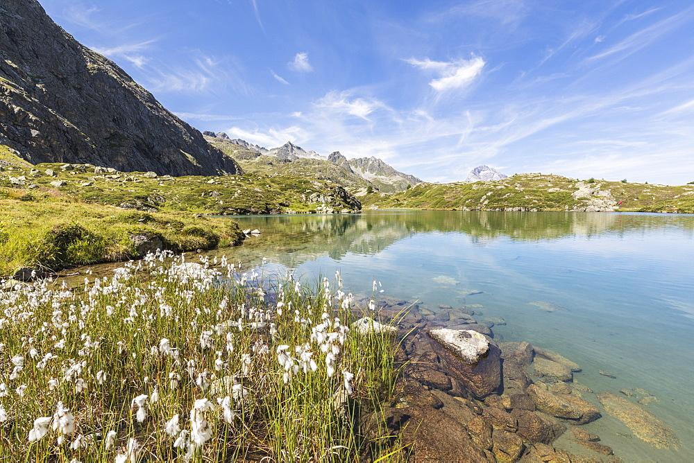 Wildflowers on the shore of the alpine lake, Crap Alv Lejets, Albula Pass, canton of Graubünden, Switzerland - 1179-2533