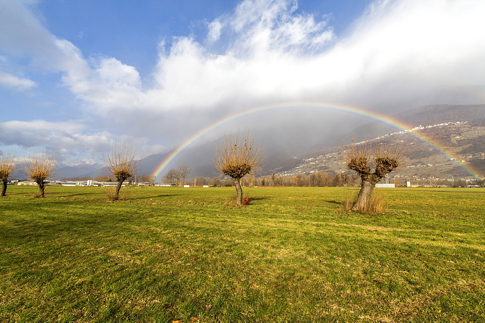 Rainbow on bare trees, Cosio Valtellino, Sondrio province, Valtellina, Lombardy, Italy, Europe