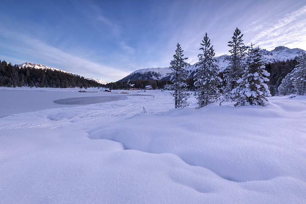 Snow covered trees, Lej da Staz, St. Moritz, Engadine, Canton of Graubunden (Grisons), Switzerland, Europe