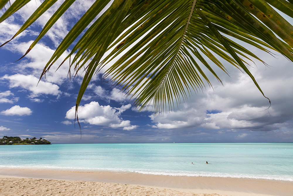 A palm branch juts out into the Caribbean Sea on Valley Church Beach one of the lesser known beaches of the Caribbean, Antigua, Leeward Islands, West Indies, Caribbean, Central America