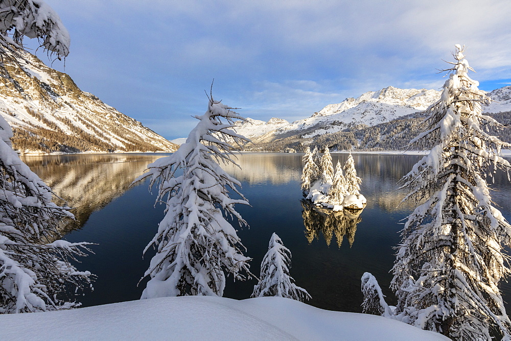 Snow covered trees on the shore of frozen Lake Sils, Plaun da Lej, Maloja Region, Canton of Graubunden, Engadine, Switzerland, Europe