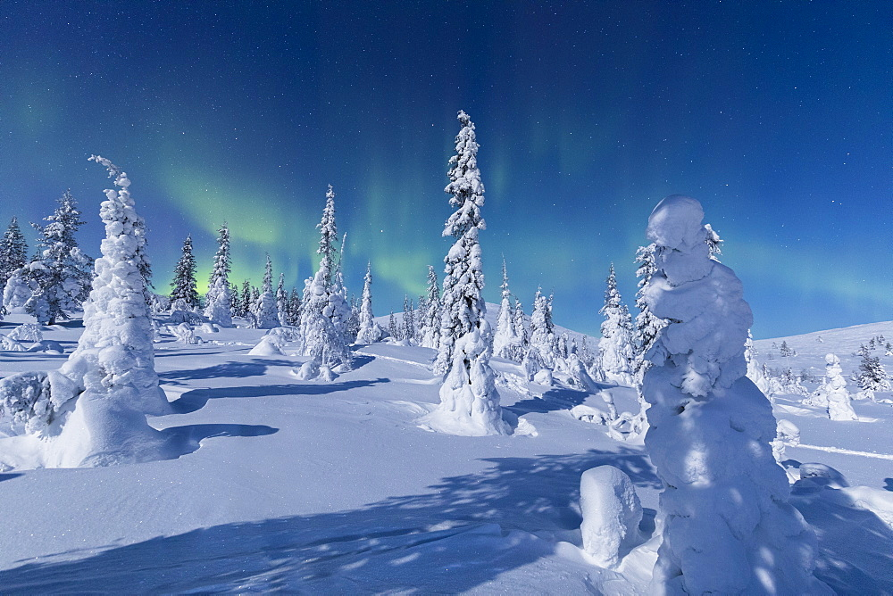 Northern Lights (Aurora Borealis) above the snowy woods, Pallas-Yllastunturi National Park, Muonio, Lapland, Finland, Europe