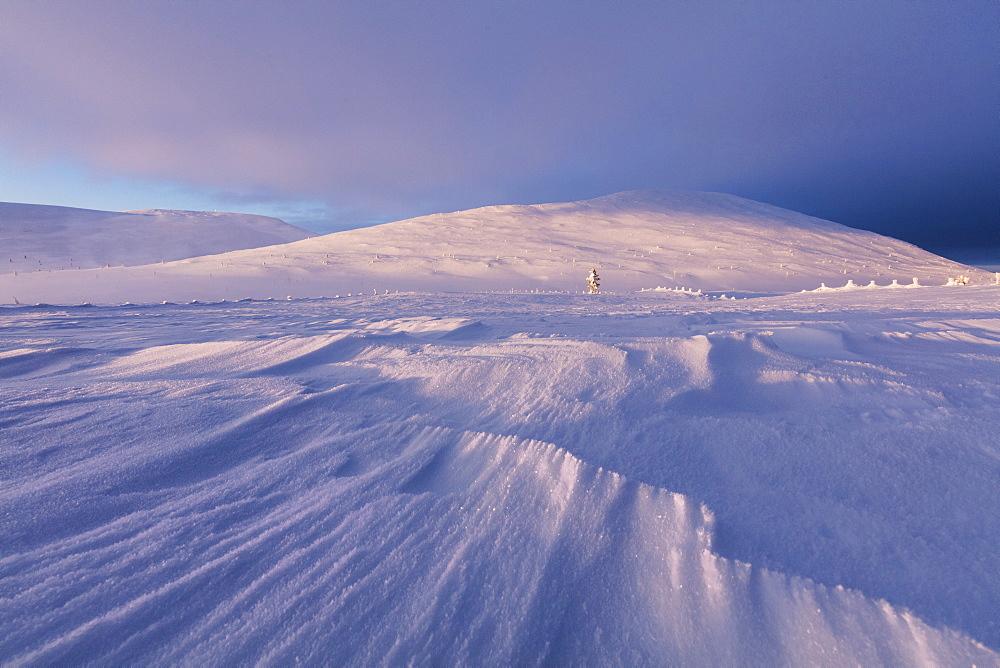 Dusk on snowy landscape, Pallas-Yllastunturi National Park, Muonio, Lapland, Finland