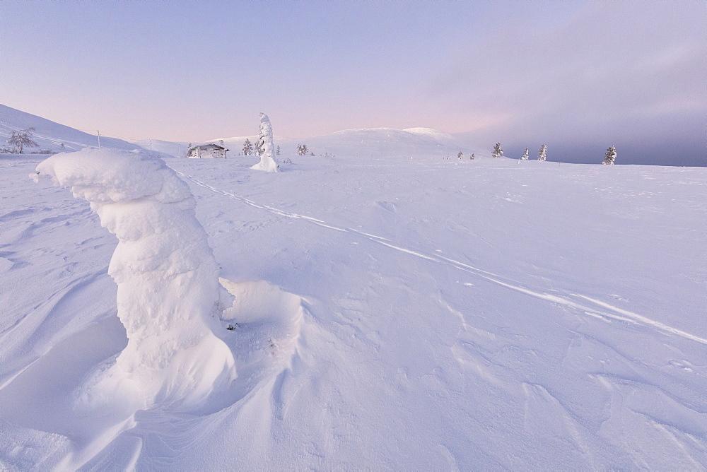 Frozen dwarf shrub in the snow, Pallas-Yllastunturi National Park, Muonio, Lapland, Finland