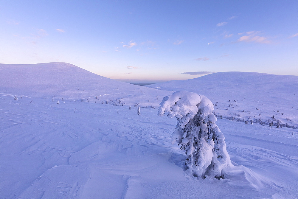 Isolated frozen tree in the snowy landscape, Pallas-Yllastunturi National Park, Muonio, Lapland, Finland