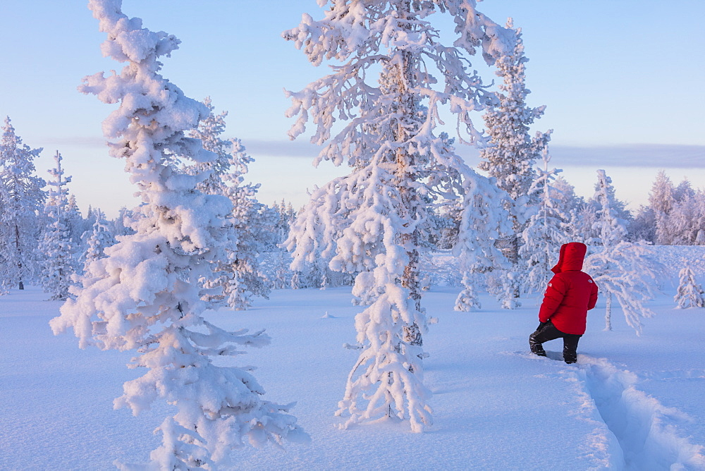 Hiker in the forest covered with snow, Luosto, Sodankyla municipality, Lapland, Finland