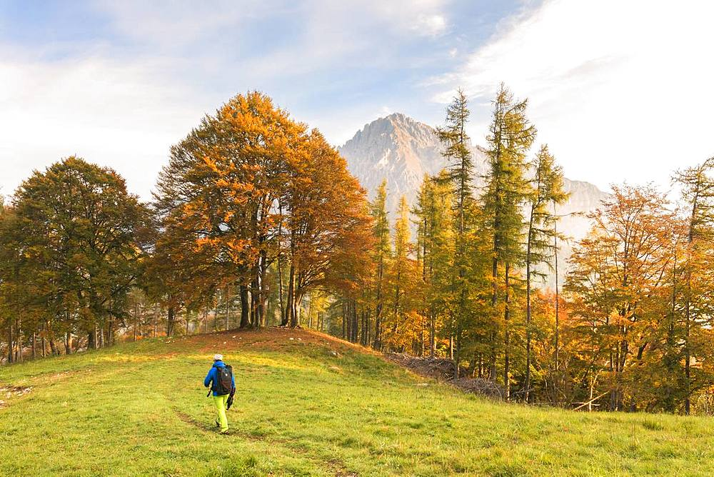 Hiker on green meadow during autumn, Piani Resinelli, Valsassina, Lecco province, Lombardy, Italian Alps, Italy, Europe