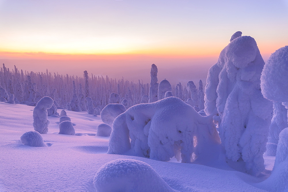 Sunrise on frozen trees, Riisitunturi National Park, Posio, Lapland, Finland