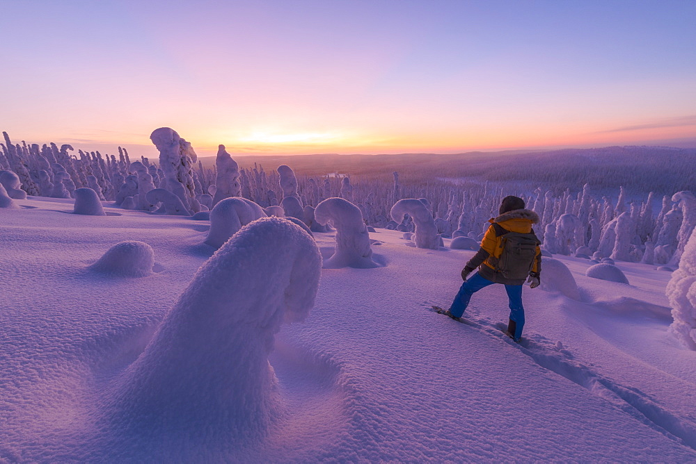 Hiker in the snowy forest at dusk, Riisitunturi National Park, Posio, Lapland, Finland