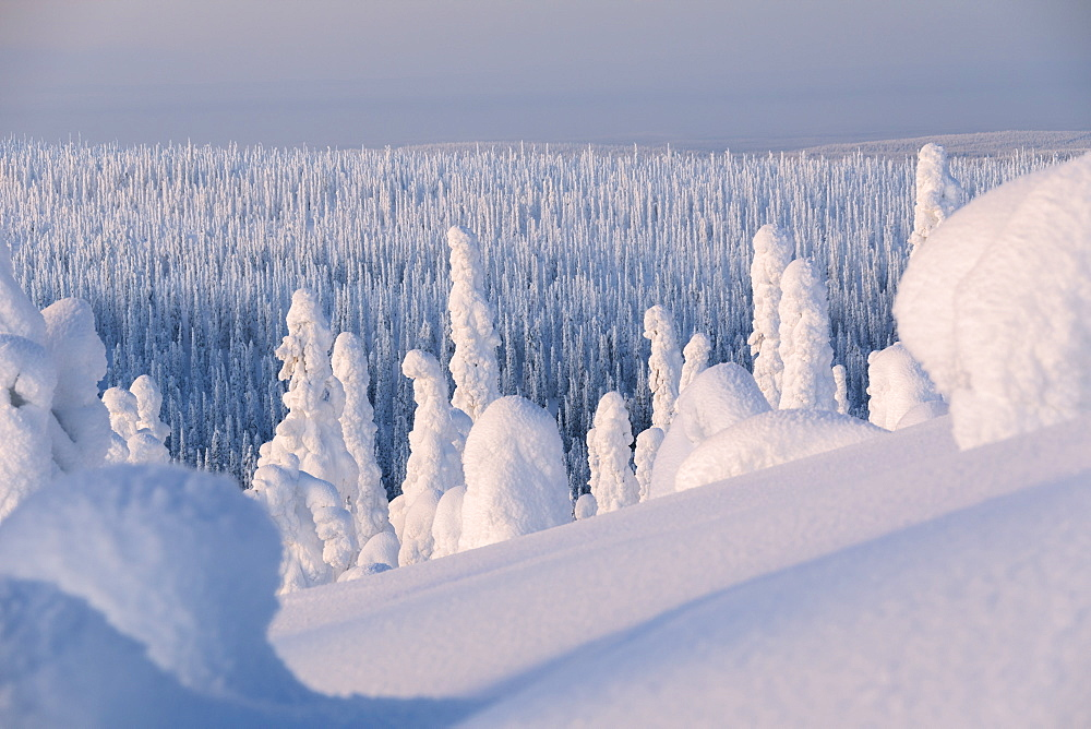 Frozen forest, Riisitunturi National Park, Posio, Lapland, Finland, Europe