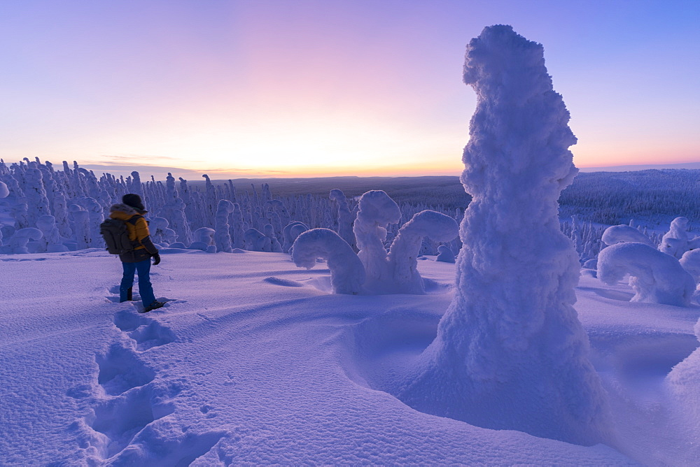 Hiker in the frozen forest, Riisitunturi National Park, Posio, Lapland, Finland