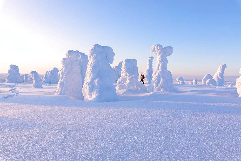 Hiker among frozen trees, Riisitunturi National Park, Posio, Lapland, Finland, Europe