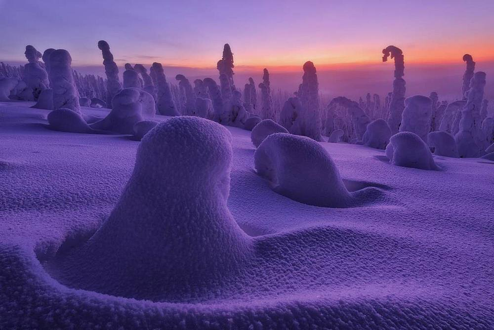 Frozen dwarf shrubs at sunset, Riisitunturi National Park, Posio, Lapland, Finland