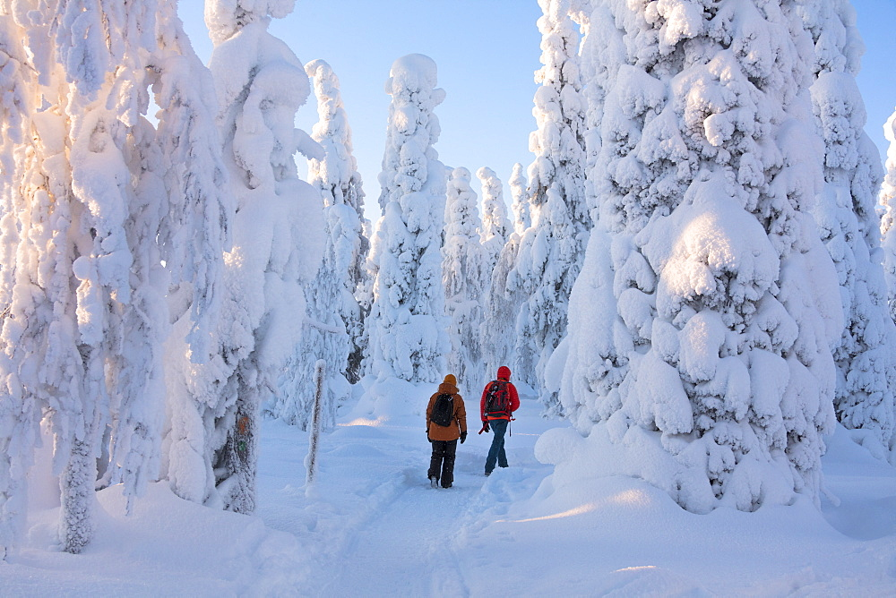 Hikers on path in the snowy woods, Riisitunturi National Park, Posio, Lapland, Finland
