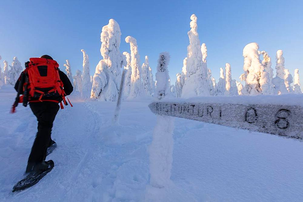 Hiker on snowshoes in the snowy woods, Riisitunturi National Park, Posio, Lapland, Finland, Europe