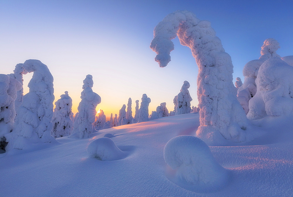 Sunburst on frozen trees at dawn, Riisitunturi National Park, Posio, Lapland, Finland