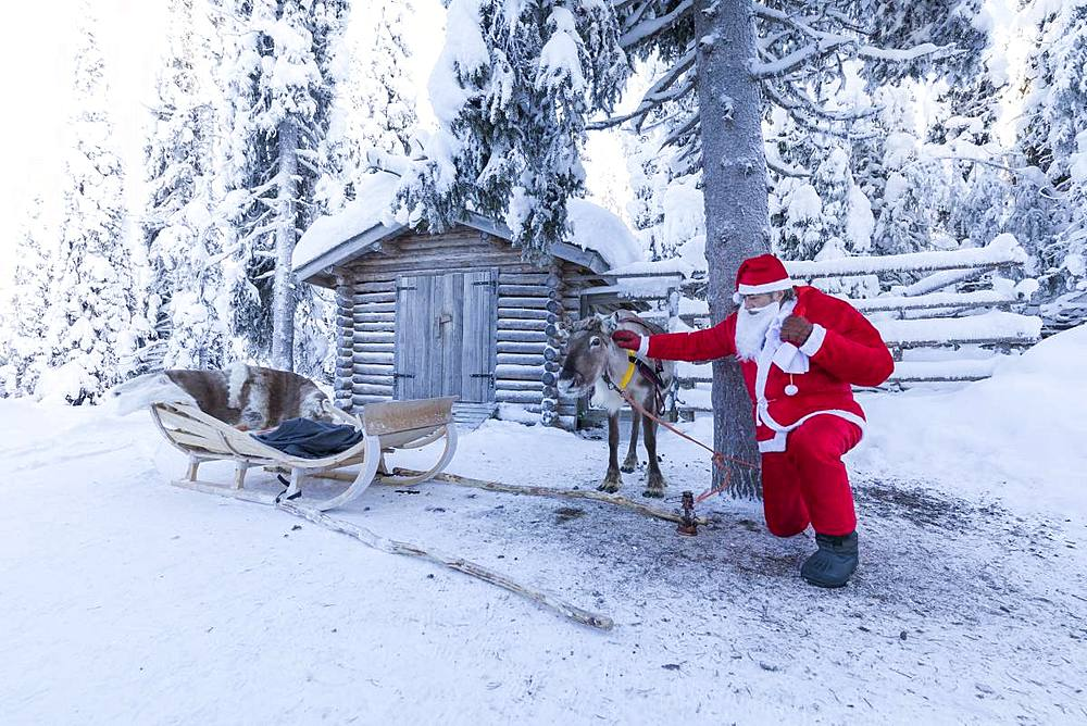 Santa Claus and reindeer, Ruka (Kuusamo), Northern Ostrobothnia region, Lapland, Finland, Europe