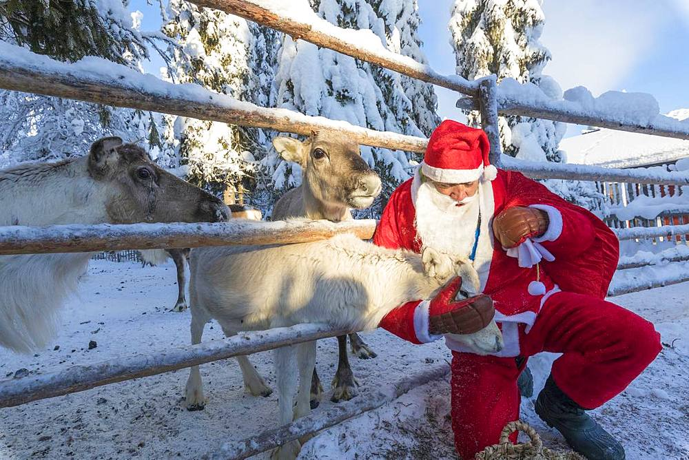 Santa Claus caresses the reindeer, Ruka (Kuusamo), Northern Ostrobothnia region, Lapland, Finland, Europe