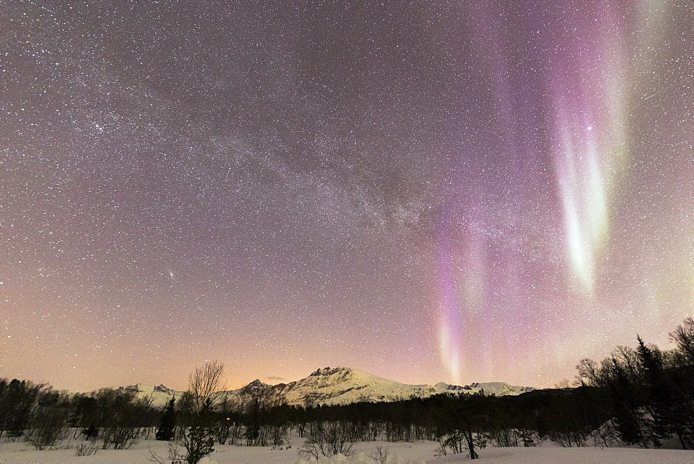 Northern Lights (Aurora borealis), Skoddebergvatnet, Grovfjord, Troms county, Lofoten Islands, Nordland, Norway, Europe - 1179-3352