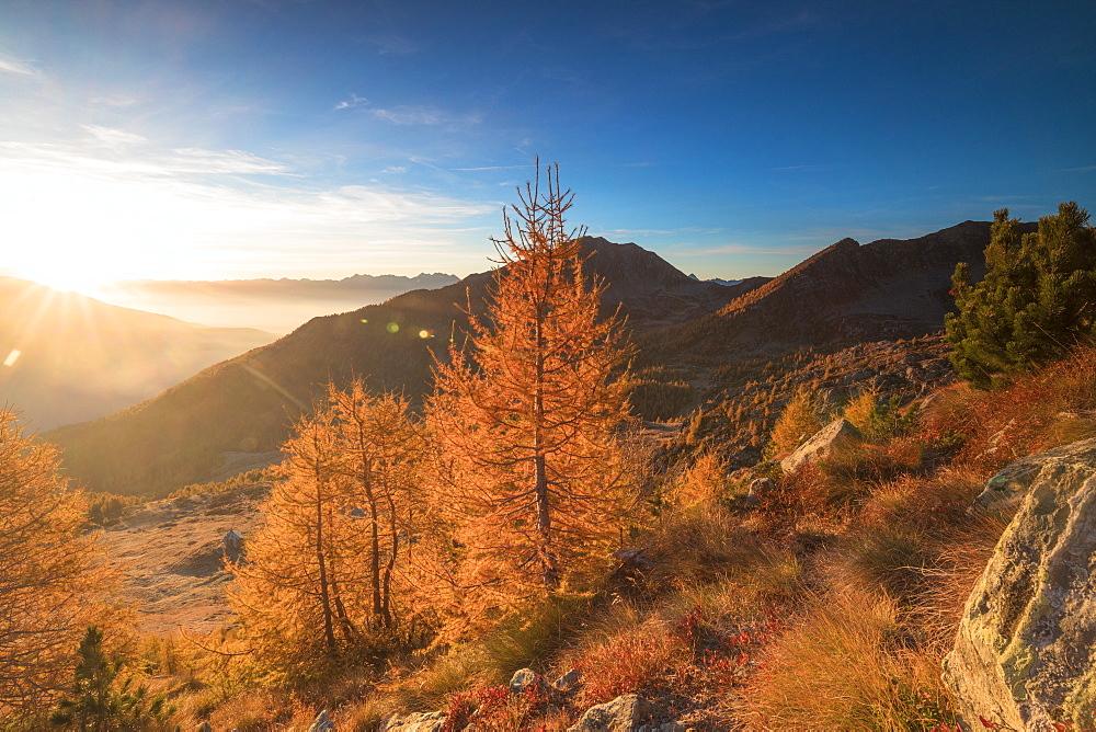 Sunburst on colorful larches during fall season, Alpe Arcoglio Valmalenco, Valtellina, Lombardy, Italy, Europe