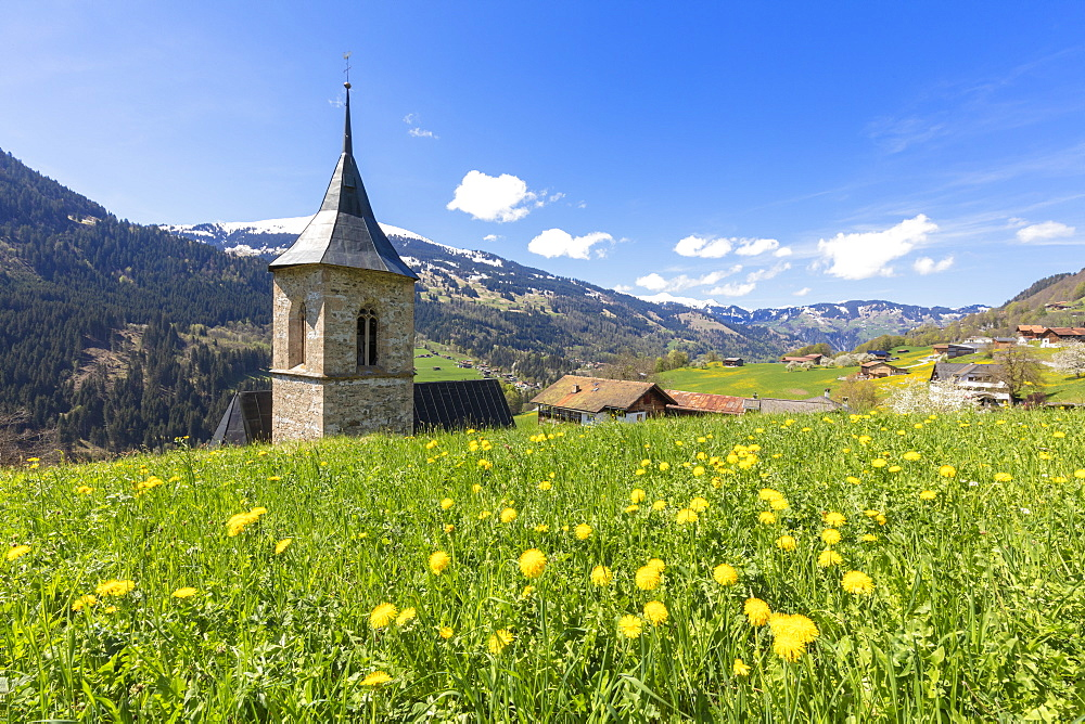 Bell tower surrounded by wildflowers and meadows in spring, Luzein, Prattigau-Davos region, Canton of Graubunden, Switzerland, Europe