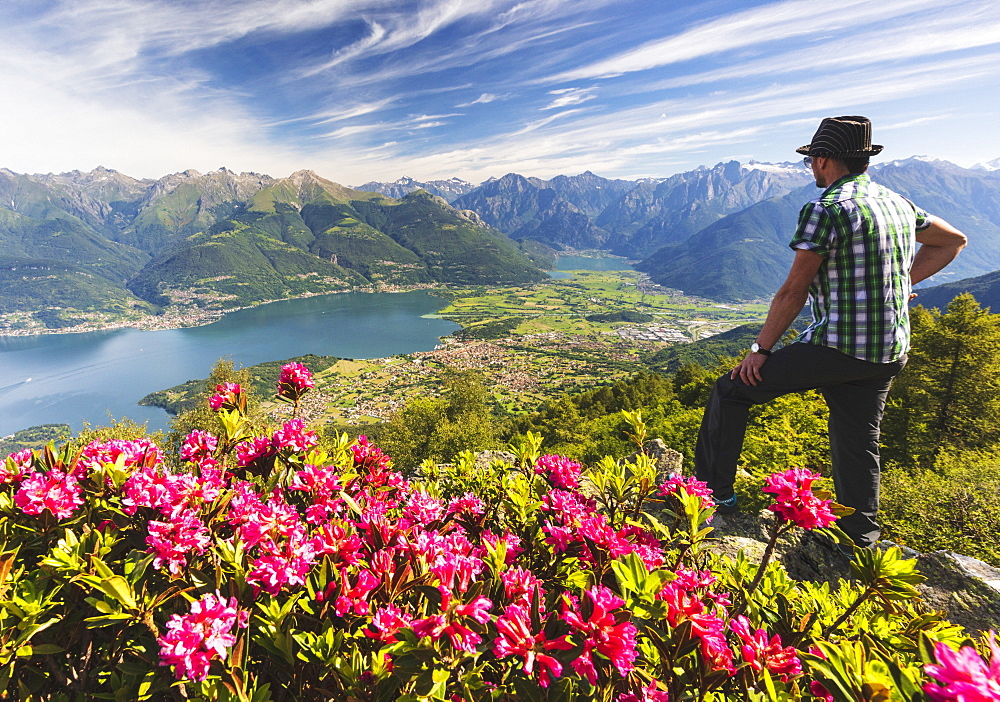 Man beside rhododendrons in bloom looks towards Lake Como and Alto Lario, Monte Legnoncino, Lecco province, Lombardy, Italy, Europe