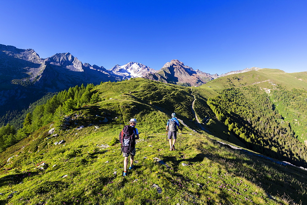 Hikers walk towards Monte Disgrazia from Scermendone Alp, Sondrio province, Valtellina, Rhaetian Alps, Lombardy, Italy, Europe