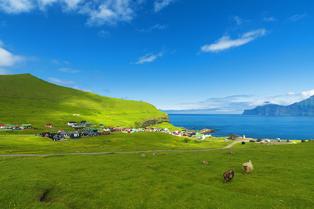 Sheep grazing, Gjogv, Eysturoy island, Faroe Islands, Denmark, Europe