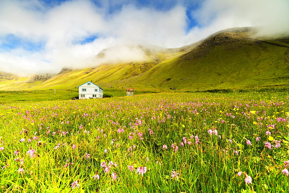 Farmhouse in fields of grass and wild flowers, Gasadalur, Vagar island, Faroe Islands, Denmark
