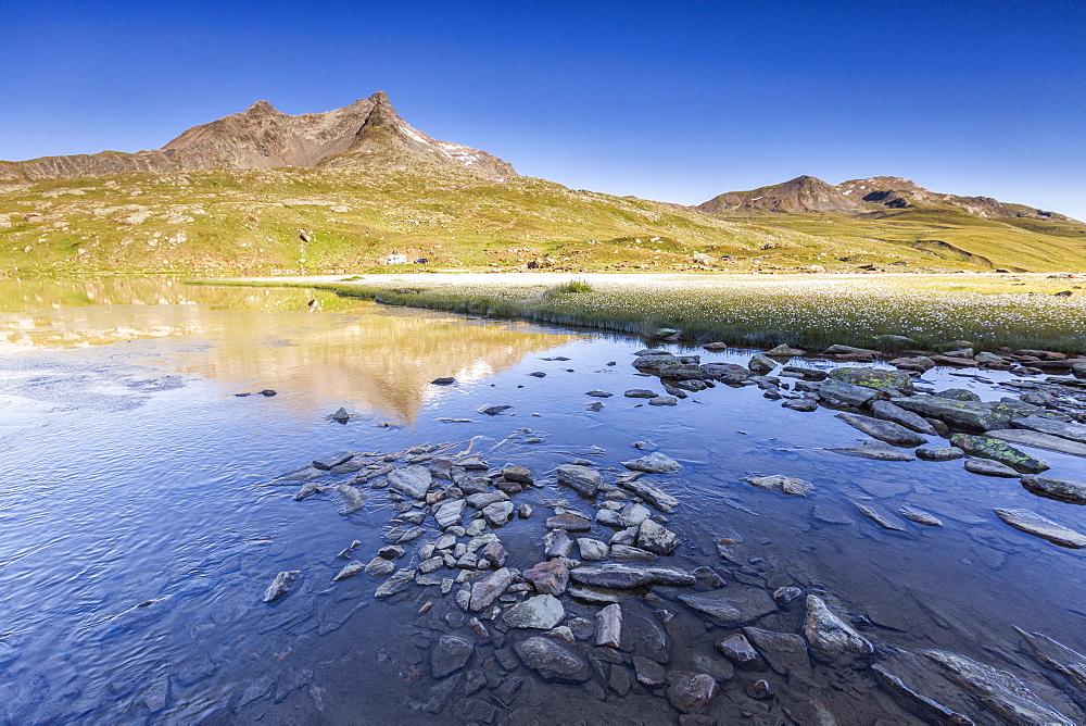 Lago Bianco surrounded by fields of wildflowers, Gavia Pass, Valfurva, Valtellina, province of Sondrio, Lombardy, Italy, Europe - 1179-3683