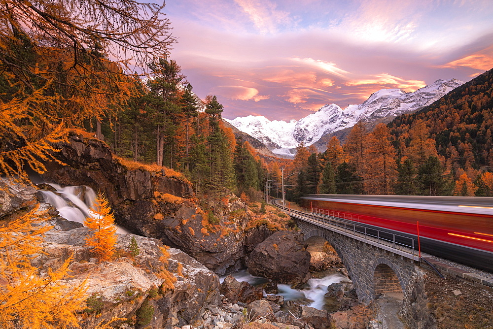 Bernina Express train in transit along colorful woods in autumn, Morteratsch, Engadine, canton of Graubunden, Switzerland, Europe