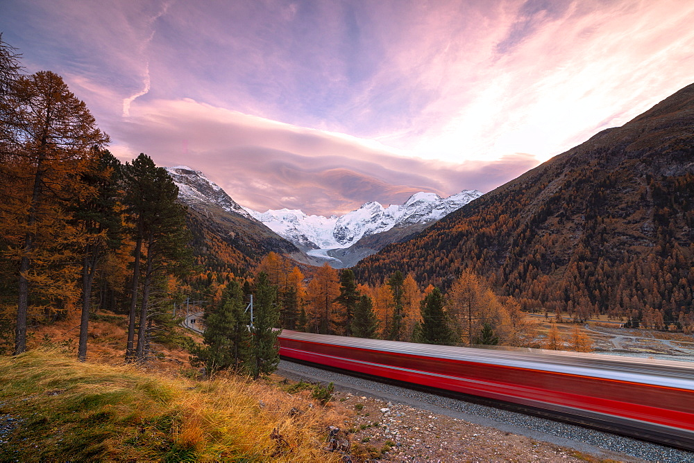 Bernina Express train and colorful woods in autumn, Morteratsch, Engadine, canton of Graubunden, Switzerland, Europe