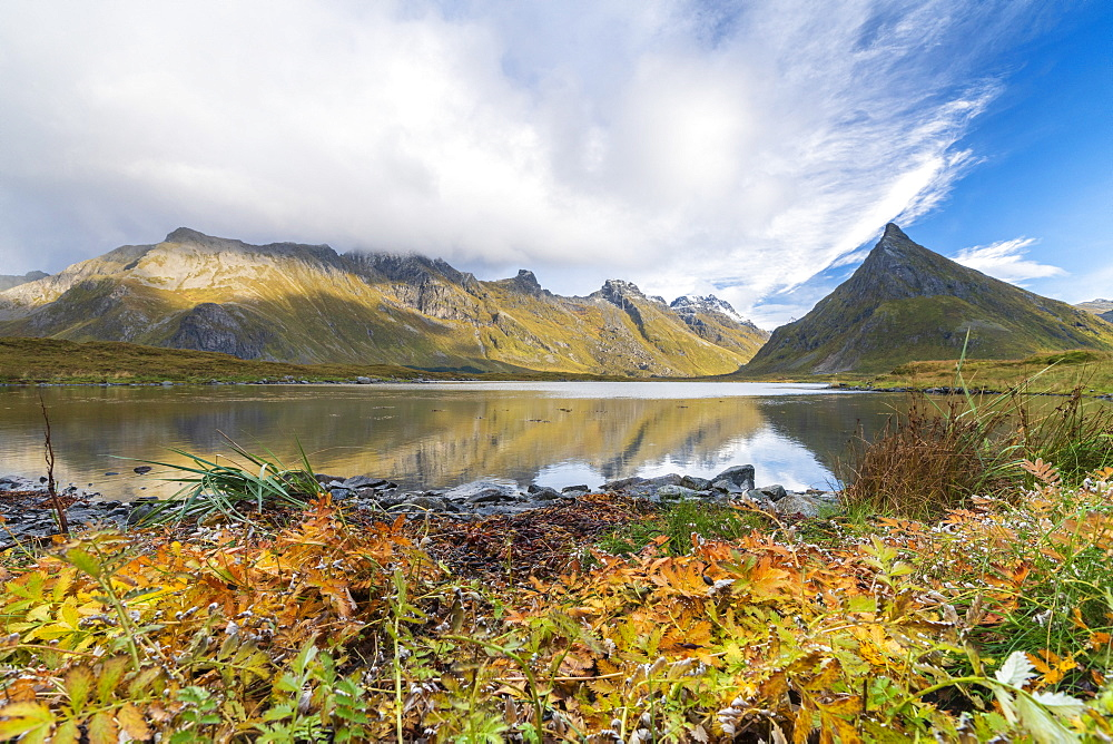 Autumn leaves by sea below mountains in Fredvang, Lofoten Islands, Norway, Europe