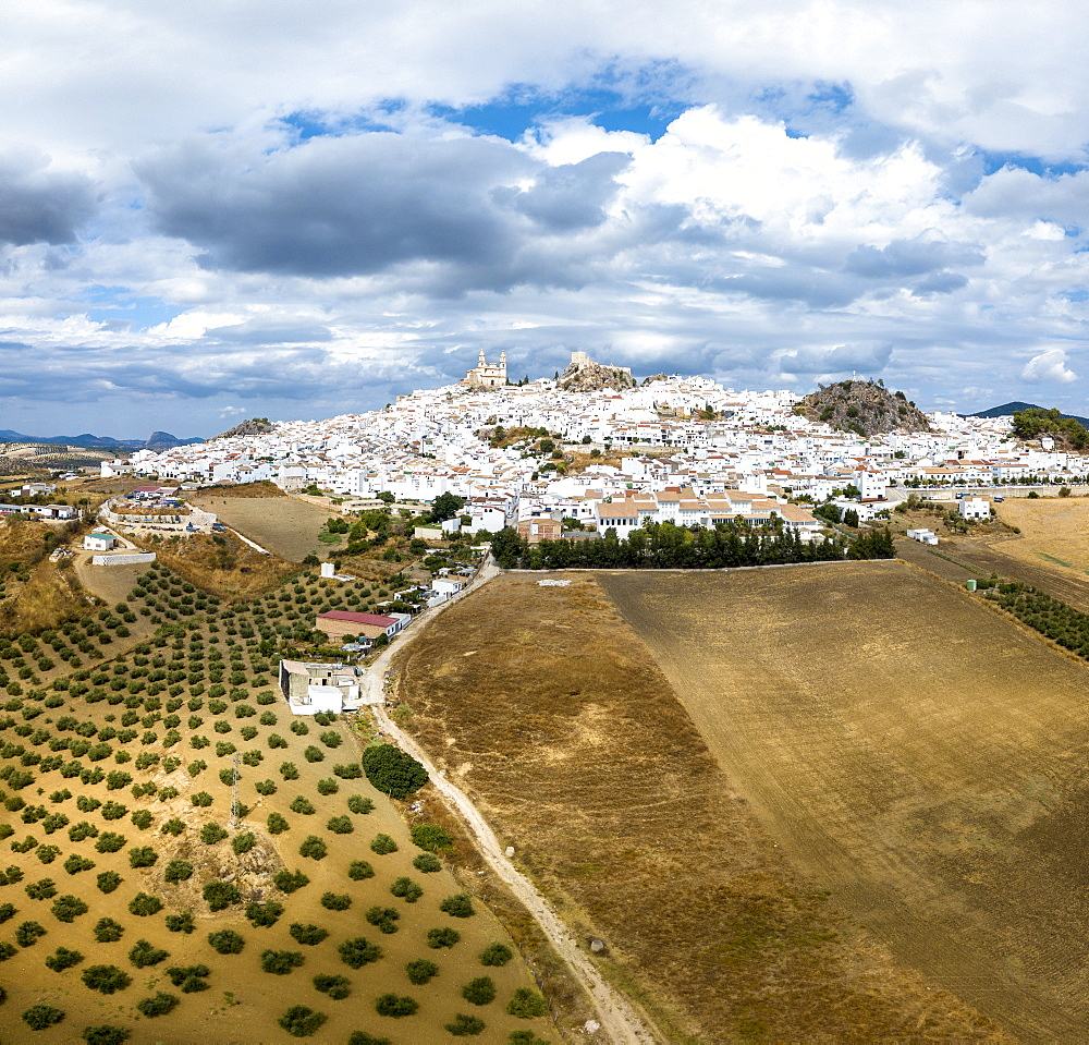 Olive groves by white town of Olvera in Spain, Europe