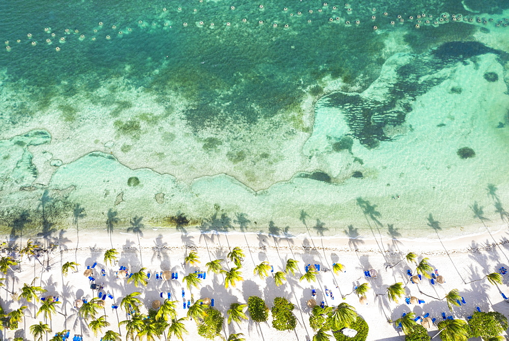 Palm-fringed beach washed by Caribbean Sea from above by drone, St. James Bay, Antigua, Leeward Islands, West Indies, Caribbean, Central America