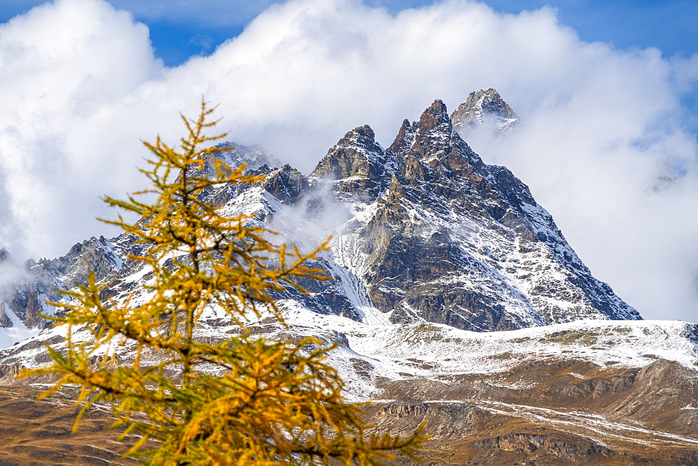 Clouds over the Ober Gabelhorn peak framed by larch trees in autumn, Zermatt, canton of Valais, Switzerland