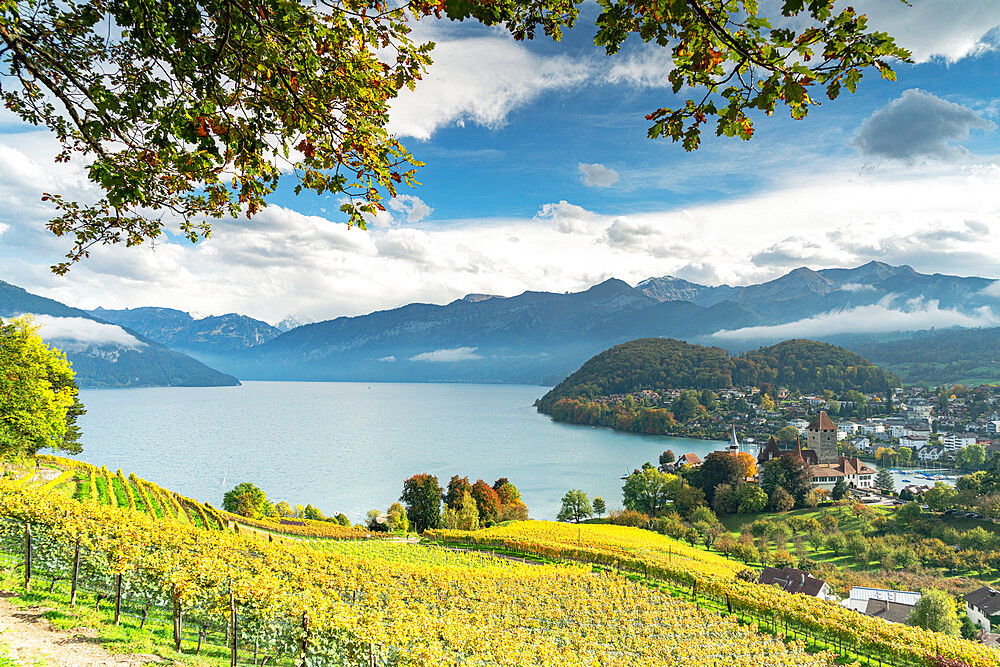 Terraced vineyards on hills above lake Thun, Spiez, canton of Bern, Switzerland