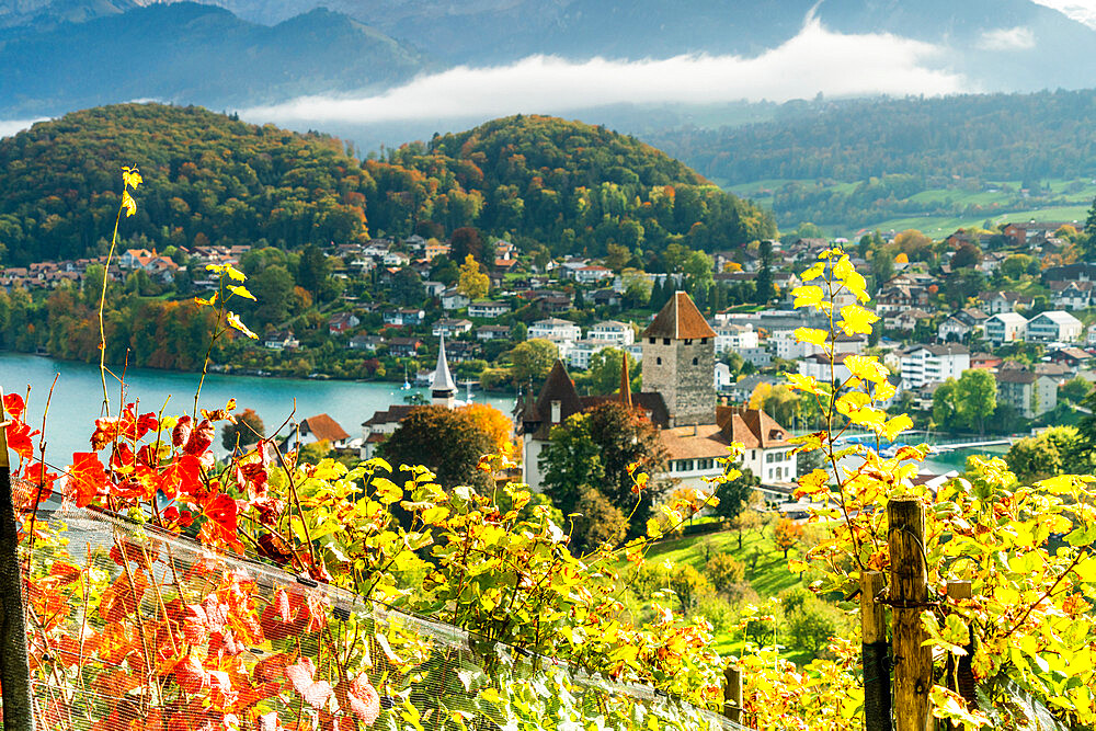 Spiez Castle on shores of lake Thun framed by vine leaves in autumn, canton of Bern, Switzerland