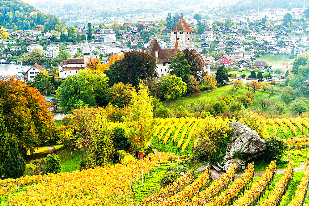 Spiez castle surrounded by vineyards in autumn, lake Thun, canton of Bern, Switzerland