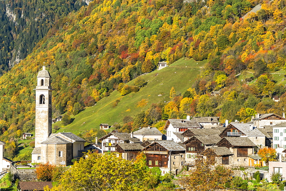 Larch trees and woods framing the village of Soglio in autumn, Val Bregaglia, Canton of Graubunden, Switzerland, Europe