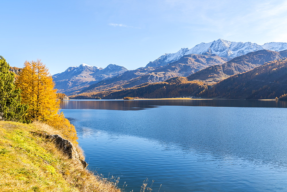 Autumn colors surrounding the clear Lake Sils, Maloja, Upper Engadine, canton of Graubunden, Switzerland