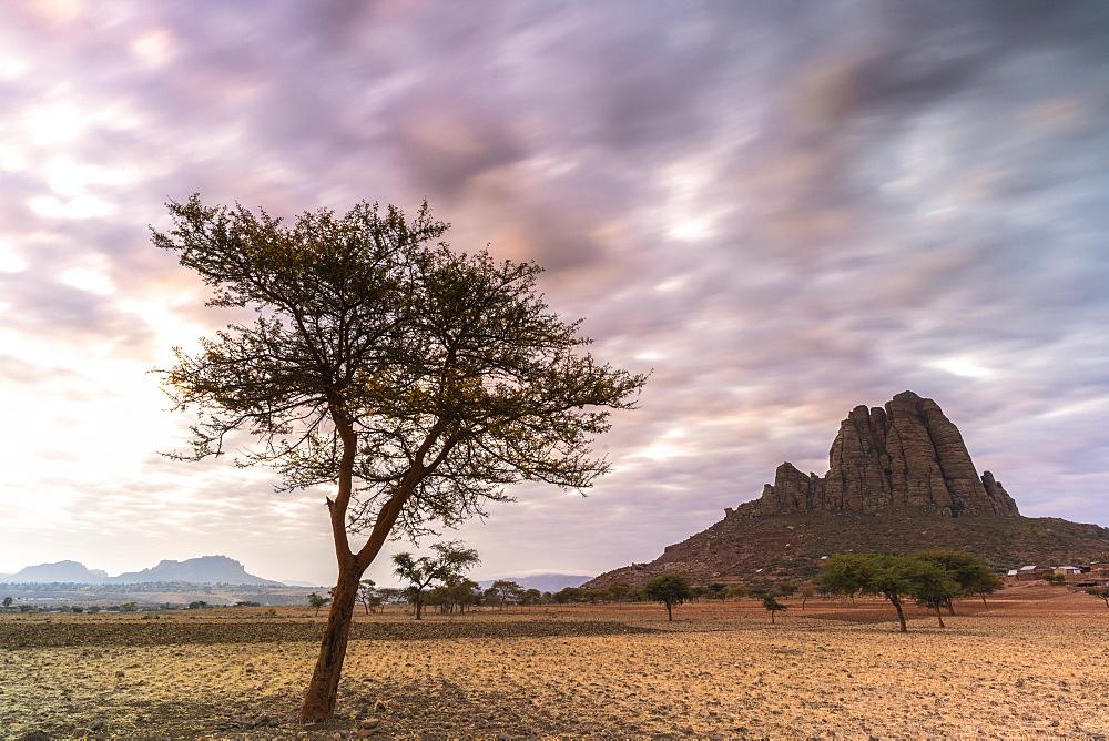 Lone trees at sunset, Gheralta Mountains, Hawzen, Tigray Region, Ethiopia, Africa - 1179-4485