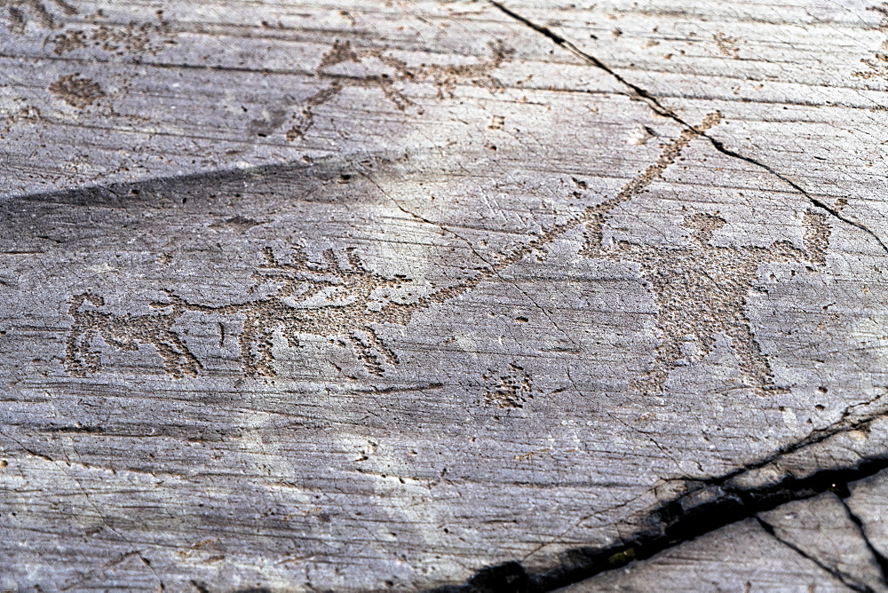 Hunting scene with deer, dog and hunter, Etruscan rock drawing, Naquane Park, Capo di Ponte, Valcamonica (Val Camonica), Lombardy, Italy, Europe
